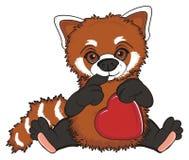 Prise de panda rouge un coeur Image stock