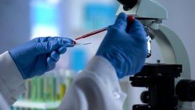 Prise de sang d'égoutture de scientifique pour l'examen de la génétique, essai de microbiologie photos libres de droits
