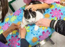 Prise de sang de vétérinaire image libre de droits