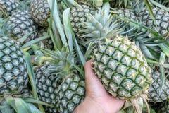 Prises de main de l'ananas image stock