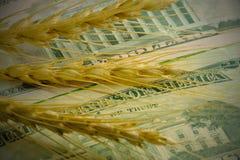 Priset av vete för import och export Tre sädes- spikelets på bakgrunden av USA-sedlar Närbild Administrativt byggande arkivfoton
