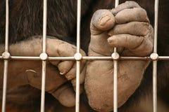 Prisioneiro imagem de stock