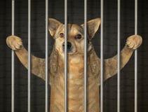 Prisioneiro do c?o na cadeia 2 imagem de stock