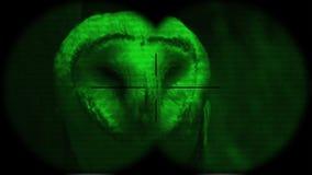 Prismáticos alba de Owl Tyto del granero a través vistos con la visión nocturna A través vistos prismáticos Observación de pájaro