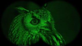 Prismáticos a través vistos bubón eurasiático del bubón del Eagle-búho A través vistos prismáticos con la visión nocturna Observa