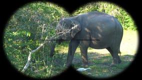 Prismáticos a través vistos maximus del Elephas del elefante asiático Animales de observación en el safari de la fauna almacen de video