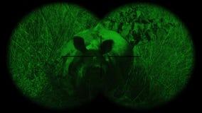 Prismáticos a través vistos unicornis de cuernos indios de un rinoceronte del rinoceronte con la visión nocturna Animales de obse almacen de video