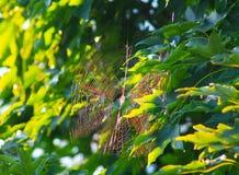 Prism Spider Web Stock Image