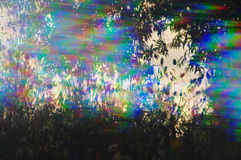 Prism spring plants. Spring plants silhouette through prism filter abstract colorful light streaks stock photo