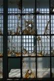 Prison: broken glass steel windows Royalty Free Stock Photography