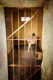 Prison Cell Stock Image