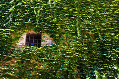 Prison cell window. On a castle wall stock images