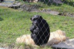 Prison de singe photo stock