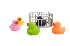 Prison duck. Rubber ducks whit black thief isolated over white Stock Images