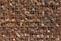 Prison and Imprisonment of Cones Behind Bars. Background of Pine. Background of Pine Cones. Cones on the Grate. Prison and Imprisonment of Cones Behind Bars Royalty Free Stock Images