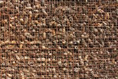 Prison and Imprisonment of Cones Behind Bars. Background of Pine. Background of Pine Cones. Cones on the Grate. Prison and Imprisonment of Cones Behind Bars Stock Photography