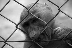 Prison for a monkey Stock Photography