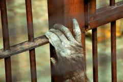Prisoned monkey Royalty Free Stock Photo