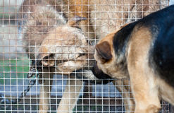 Prisoner. One dog visit another one siting in a cage Royalty Free Stock Photography