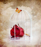 Prisoner rose and butterfly Royalty Free Stock Images