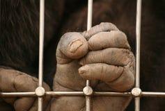 Prisonnier Photo stock