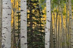 Prisonnier de forêt Photographie stock libre de droits