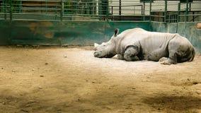 Prisonnier du zoo images libres de droits