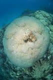 pristine övre sikt för korallbildande hard Arkivbild