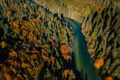 Pristine alpine river meandering through forested landscape Stock Photography