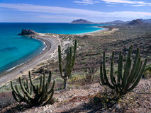 Pristine beach, blue sea, Baja California. Pristine beach at Baja California Mexico with saguaro cactus and blue sea Stock Photos