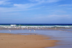 Pristine Beach with Seagulls Royalty Free Stock Photos