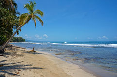 Pristine Caribbean beach in Costa Rica Royalty Free Stock Photo
