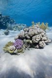 Pristine coral in tropical sea Royalty Free Stock Image