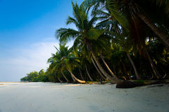 Pristine Empty Palm-Lined Beach. Windswept palm trees line a secluded empty beach on Havelock Island in India Stock Photography