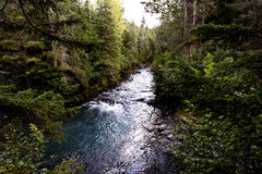 Pristine Glacial River System Fringed With Forest Royalty Free Stock Images