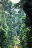 Pristine rainforest of Borneo. A road crosses the rainforest in Danum Valley. Here the forest has never been logged. Competing to reach the light the trees are Stock Photography