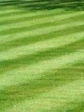 pristine randigt för gräslawn Arkivbilder
