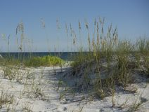 Path through the Sand Dunes and Sea Oats to the Gulf of Mexico B royalty free stock photography