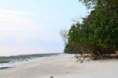 Pristine and Serene White Sandy and Rocky Beach with Coastal Plantation - Kalapathar, Havelock, Andaman - Natural Background. This is a photograph of pristine royalty free stock photography