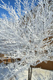 pristine snowcovered tree royaltyfria bilder