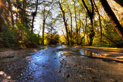 Pristine stream under forest canopy Royalty Free Stock Image