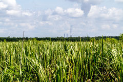 Pristine Wetlands Covered with Reeds and Other Aquatic Plants with Smoke Stacks of Power Plant in Background Royalty Free Stock Photo