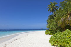 Pristine white sand beach and palm trees Royalty Free Stock Photography
