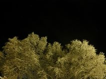 Pristine white snow covered trees with dark star night sky. Background Stock Photo