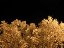 Pristine white snow covered trees with dark star night sky. Background Royalty Free Stock Image