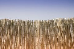 Privacy concept image. Wattle against the blue sky - Privacy concept image Stock Images