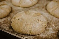 Privat bageri Brödugn Produktion av baka i Seminariumdanande På fabriken Royaltyfri Bild