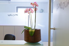 Privat Hospital, Clinical or medical practice waiting room. With Flowers on the desk stock photo