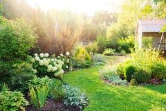 Privat trädgård för sommar med att blomma vanliga hortensian Annabelle royaltyfri bild