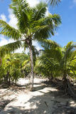 Private island, Indian Ocean Stock Images